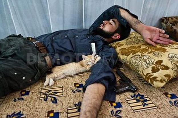 Gato dorme com insurgente