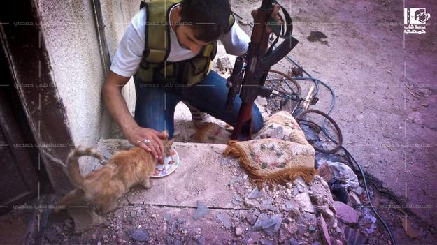 Rebelde alimentando felino