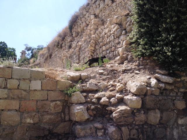 Um gato de rua na Nova Igreja de Jerusalém, em ruínas. Crédito Diogo Bercito/Folhapress