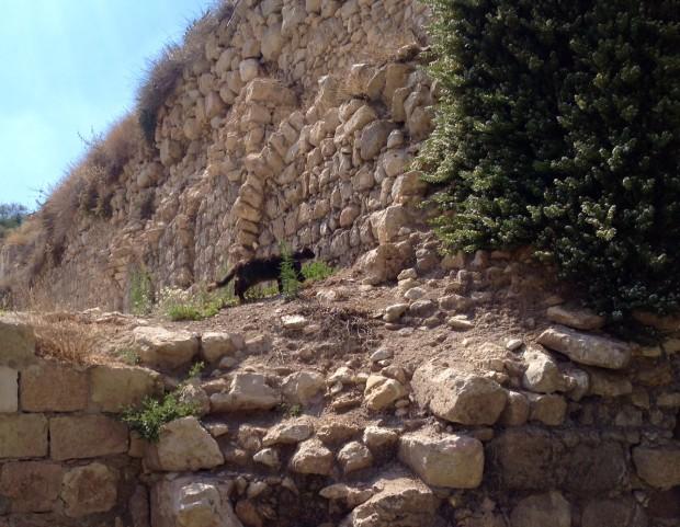 Gato caminha em ruínas em Jerusalém. Crédito Diogo Bercito/Folhapress