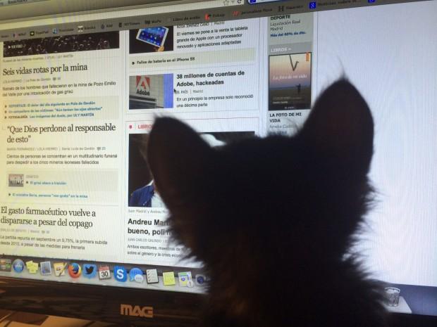 Minha gata lê as notícias, preocupada, em Israel.